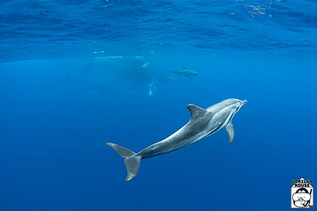 イルカとクジラの親子